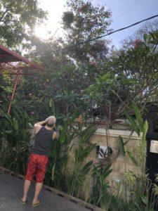 バリ島ギャラリー